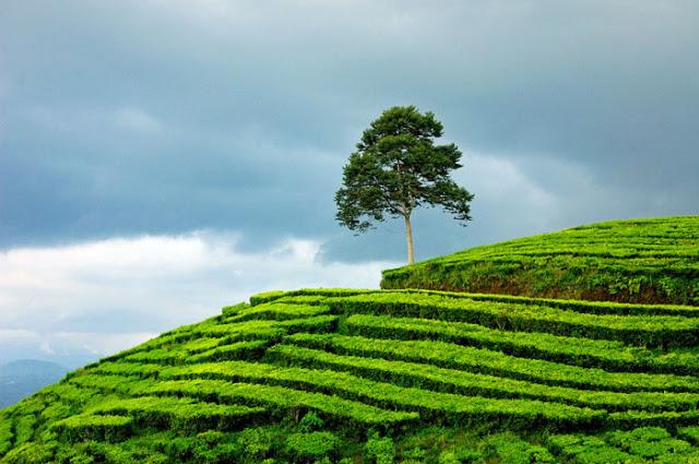 Surga dari Bumi Sriwijaya