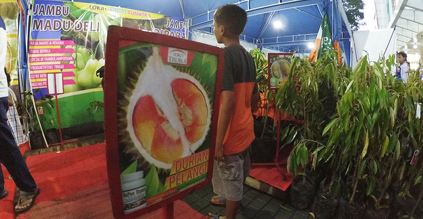 Bibit durian pelangi dzulfikaralala.com