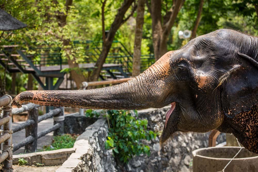 gajah-kebun-binatang_1