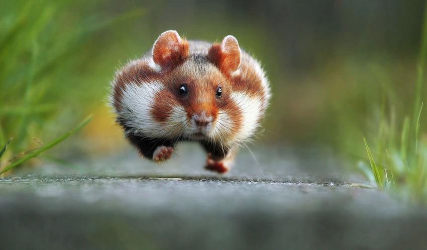 Unduh 770+ Gambar Binatang Yang Lucu Paling Lucu