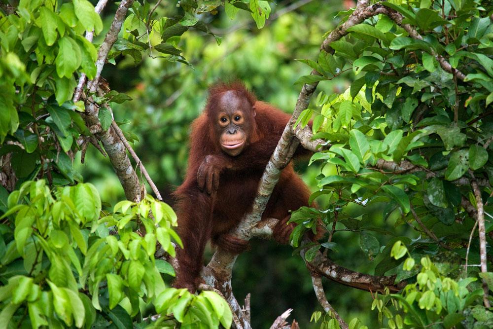 Kondisi Hutan Kalimantan Sebelum dan Sesudah Terbakar