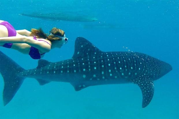 Makhluk bawah laut (wow Hiu)