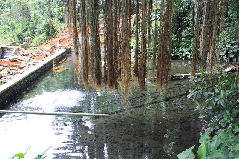 Wisata Sumedang Bukan Hanya Situ Cilembang, Lihat Beningnya Mata Air Cipelang