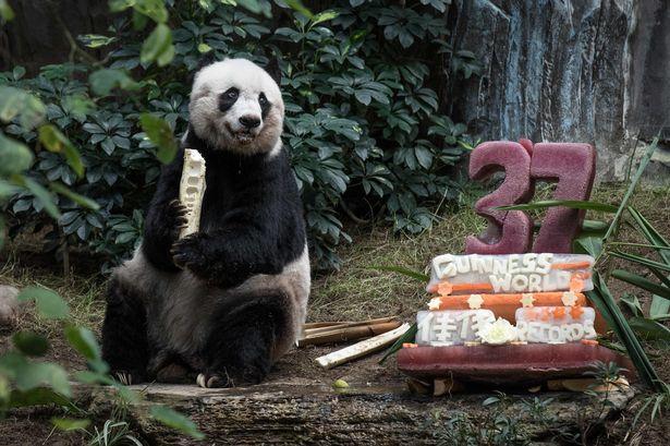 Jia jia pada saat perayaan ulang tahun ke-37 pada 2015 yang lalu.