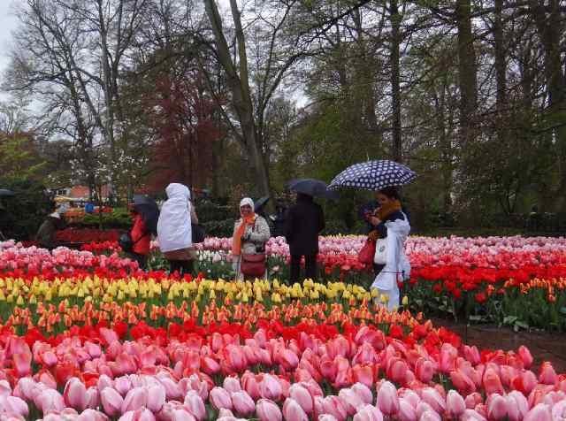 Tante (syal orange) di antara Bunga Tulip
