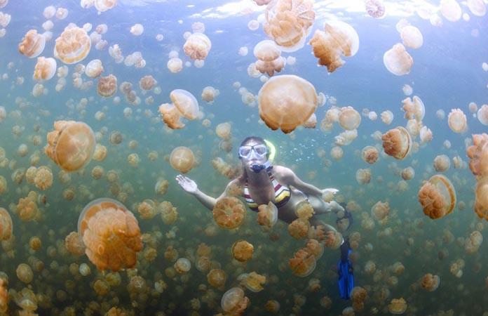 Asyiknya Berenang dengan Ubur-ubur di Pulau Kakaban