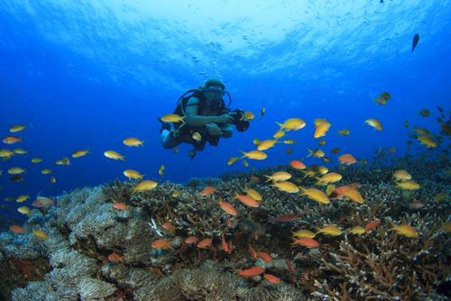 Foto Underwater yang Akan Membuatmu Ketagihan Menyelam