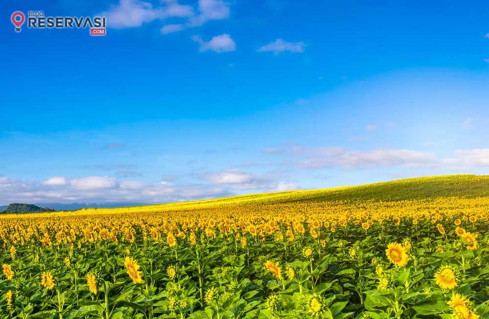 Piknik Asyik Mengelilingi 15 Taman Bunga Cantik di Dunia Ini, Liburanmu Tentu Penuh Warna!