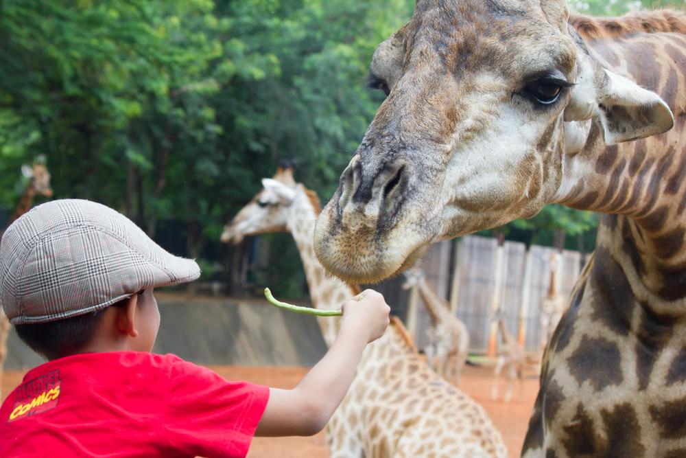 Taronga Zoo yang berada di Sydney