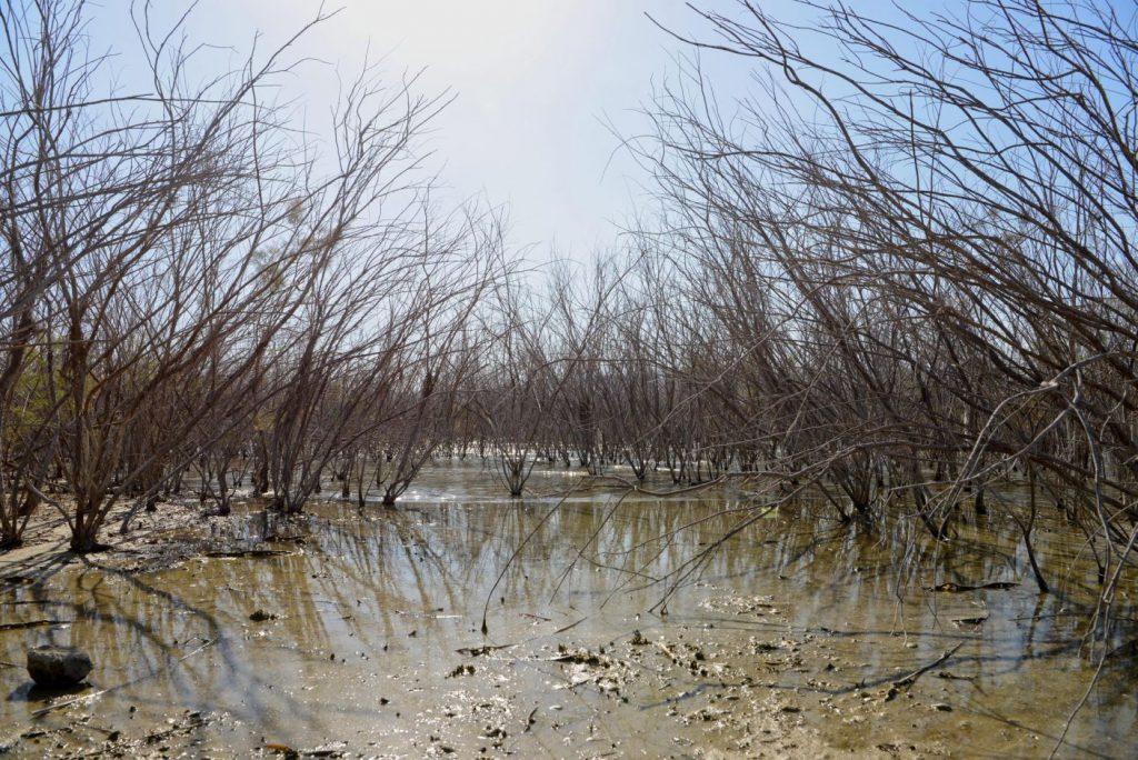 Danau Tiberias