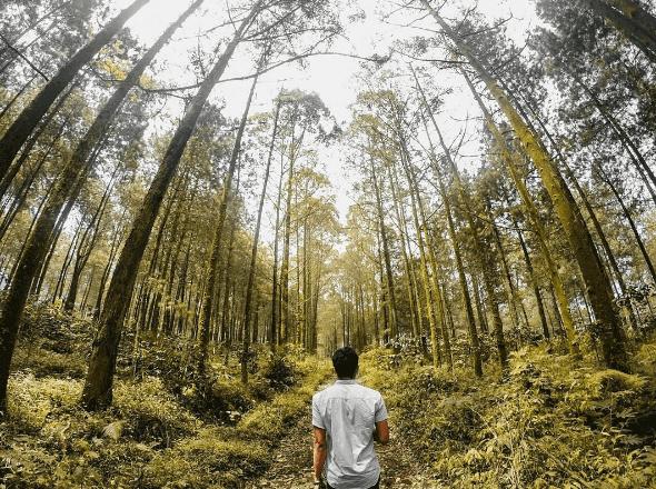 Budug Asu Malang