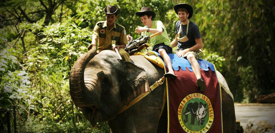 Ingin Berkunjung ke Taman Safari Bogor? Ketahui Dulu Hal Berikut ini