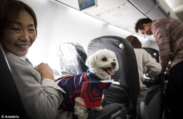 anjing masuk kabin pesawat