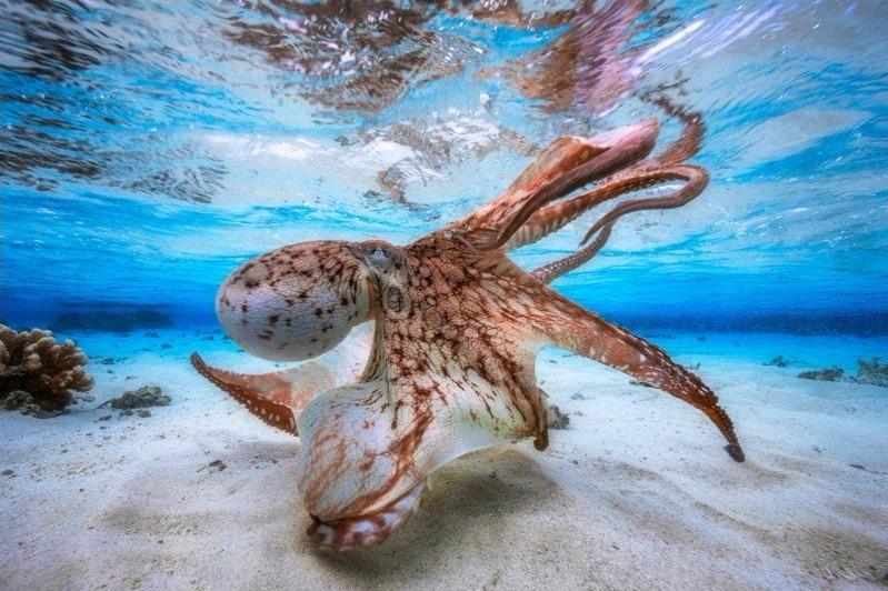 Foto Underwater Terbaik Dunia Tahun 2017