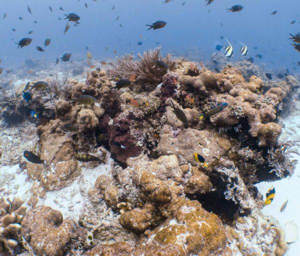 terumbu karang raja ampat rusak