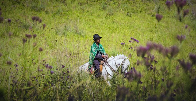 Menikmati Keindahan Pesona Padang Rumput Savana Ollon di Tana Toraja