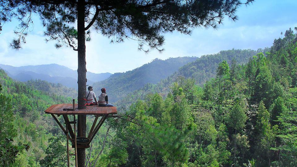 Jawa Timur Hadirkan Tempat Wisata Baru, Pinus Kita Pacitan yang Ciamik!