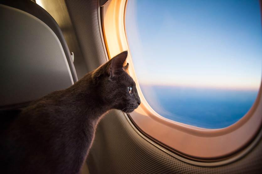 Wanita Ini Dipindahkan dari Tempat Duduk United Airlines Gara-Gara Seekor Kucing