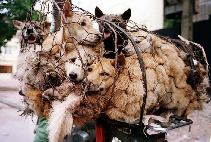 Dianggap Terlalu Sadis, Larangan Menjual Daging Anjing Saat Festival Yulin Mulai Diberlakukan