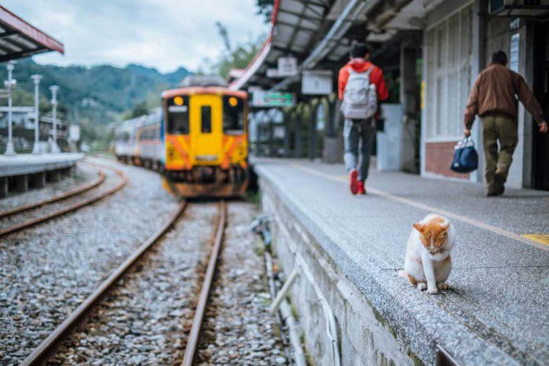 kafe kucing di kereta