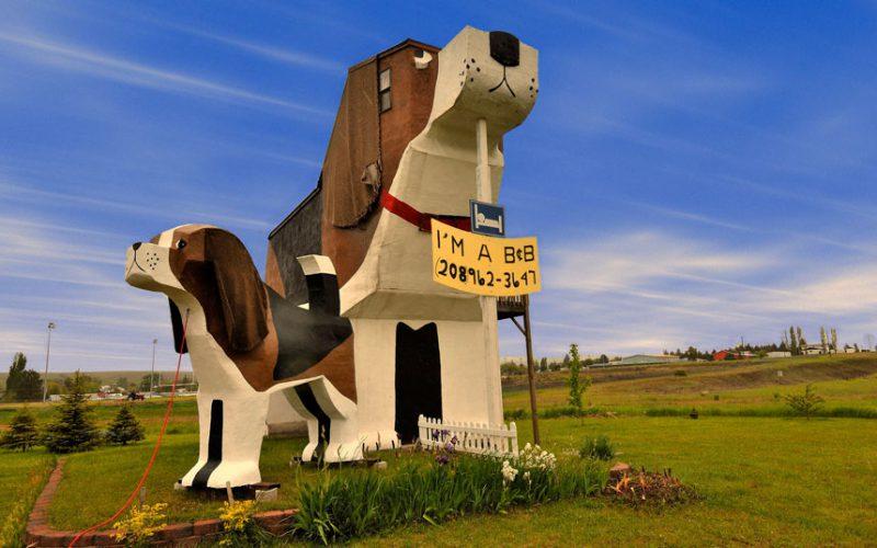 hotel unik di dunia berbentuk anjing