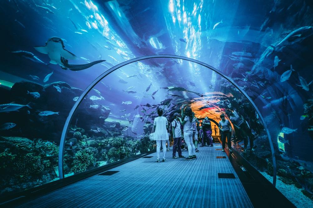 Keren, Bandara Internasional Dubai Gunakan Ikan untuk Pemeriksaan Keamanan