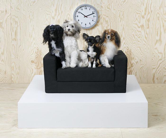 sofa untuk anjing