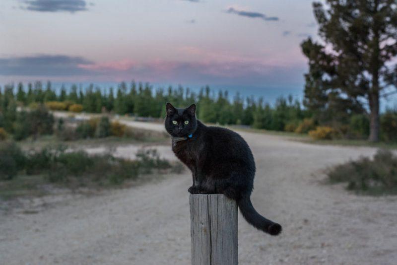 traveling bareng kucing