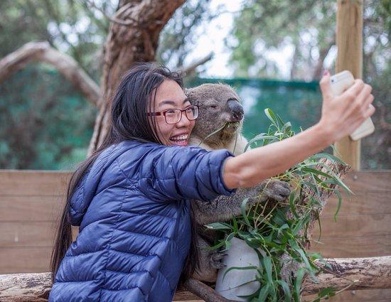 Instagram Beri Peringatan Bagi Pengguna yang Selfie dengan Hewan