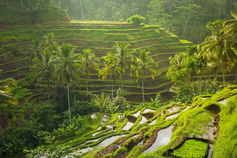 Vila-dengan-Pemandangan-Indah-di-Bali-1