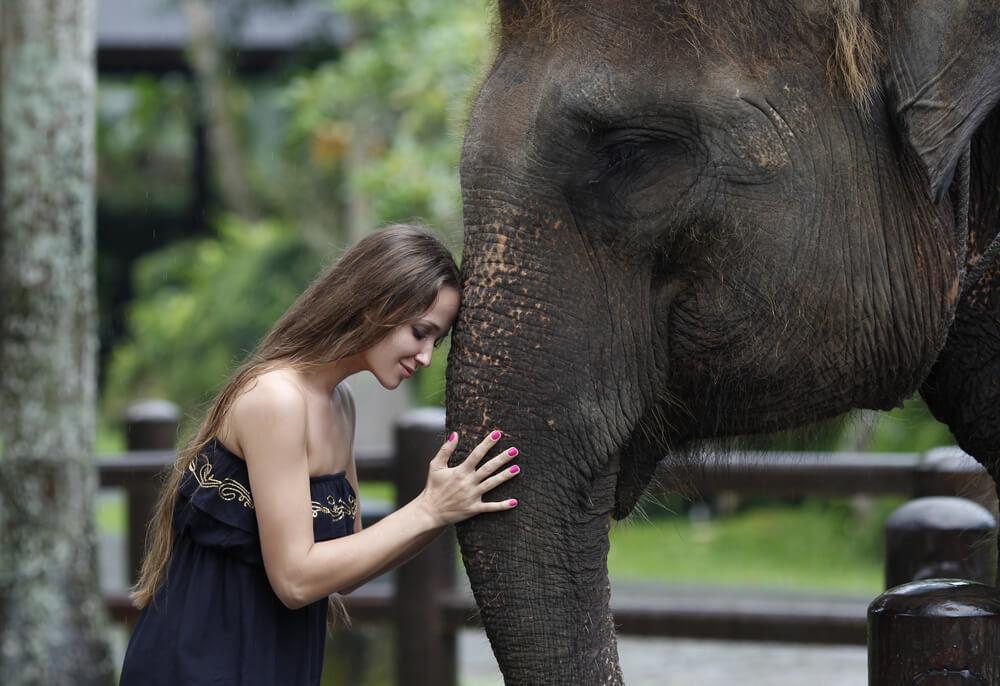 4 Kebun Binatang Terbaik di Bali, Cocok Saat Liburan Bersama Anak