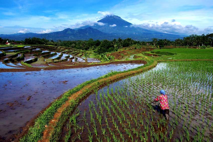 Panduan Wisata Sehari di Magelang, dari Candi Borobudur Hingga Kulineran