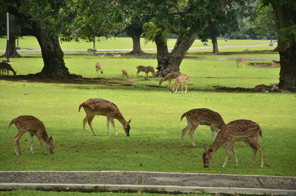 7 Tempat Wisata di Bogor Pilihan Keluarga